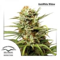 White Widow Autoflower