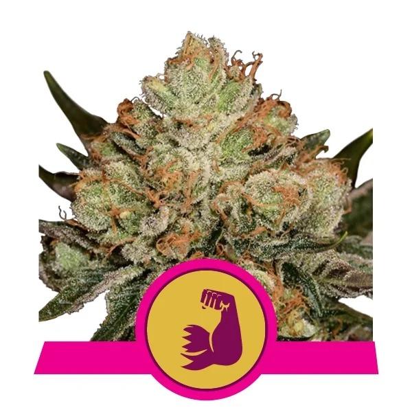 Hulk Berry